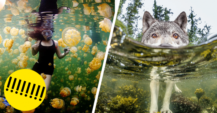 Las mejores fotografias de National Geographic de este ano fb