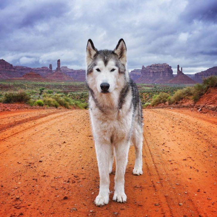 Llevo a mi perro de aventuras epicas por que odio verlo encerrado 02