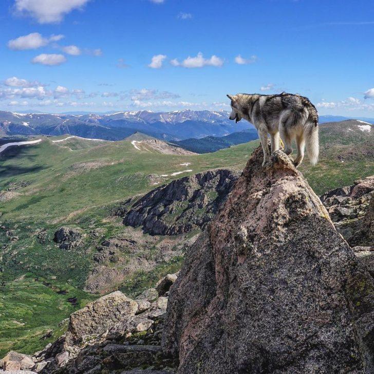 Llevo a mi perro de aventuras epicas por que odio verlo encerrado 03
