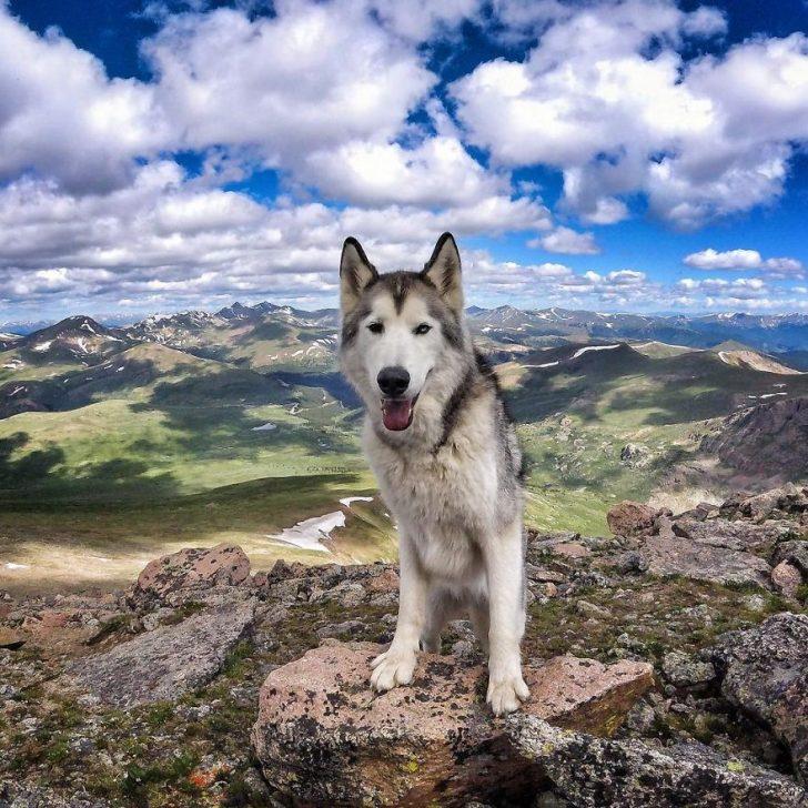 Llevo a mi perro de aventuras epicas por que odio verlo encerrado 17