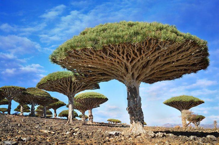 Los 16 Árboles más Espectaculares y Hermosos del Mundo