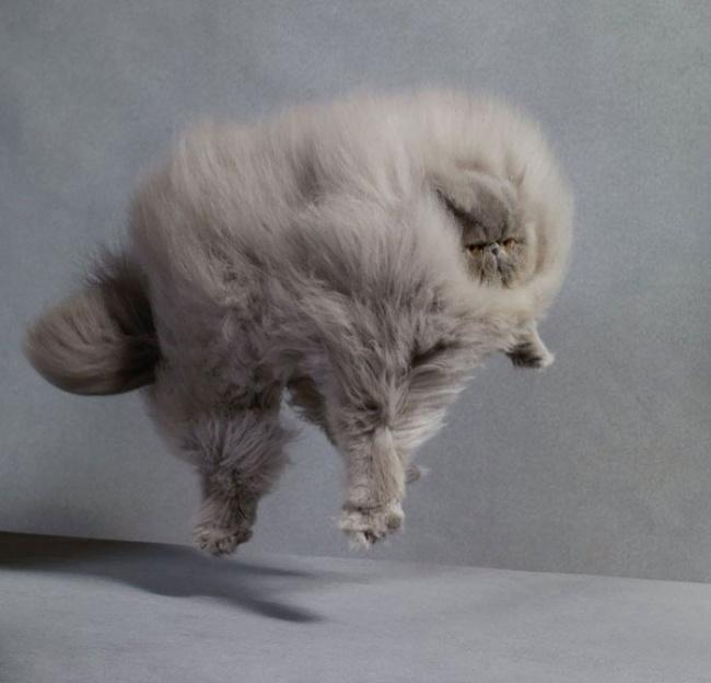 Los gatos mas peludos del mundo 03