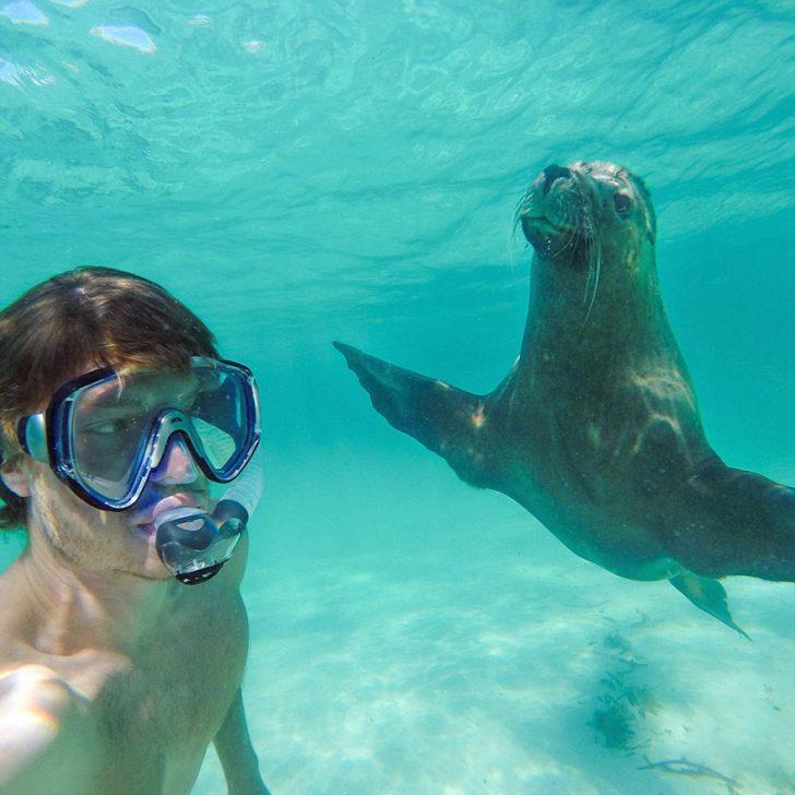 Maestro selfies con animales 10
