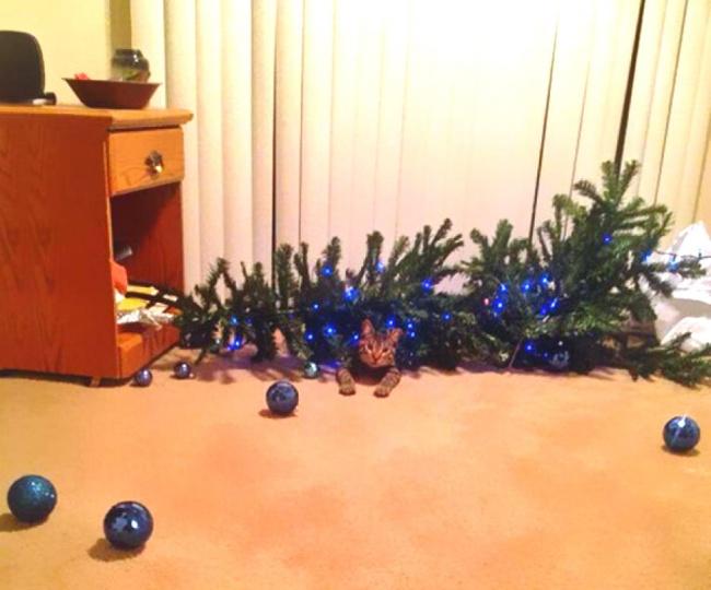 Perros y gatos que se enfrentaron a un arbol de navidad 02
