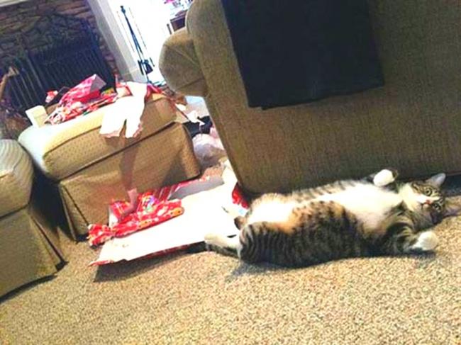 Perros y gatos que se enfrentaron a un arbol de navidad 03