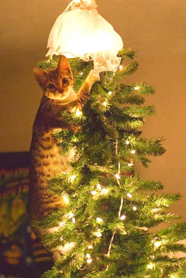 Perros y gatos que se enfrentaron a un arbol de navidad 06
