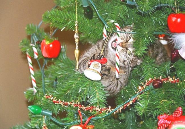 Perros y gatos que se enfrentaron a un arbol de navidad 07