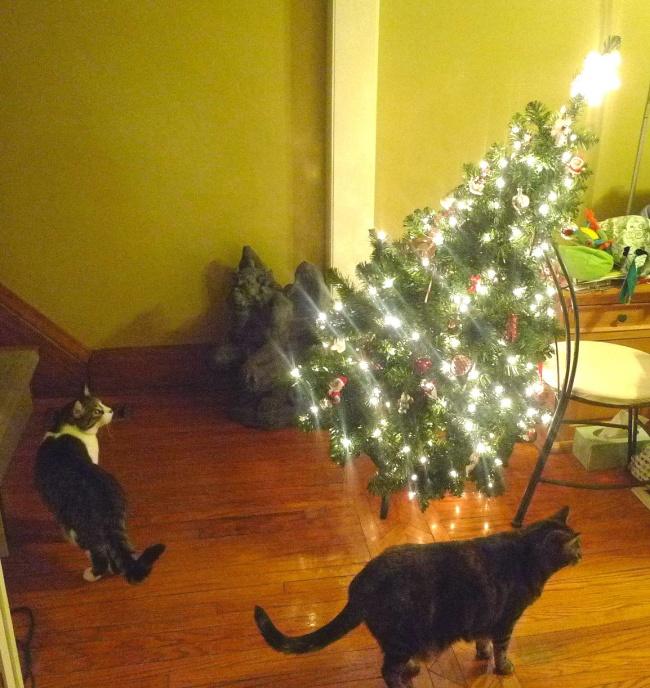 Perros y gatos que se enfrentaron a un arbol de navidad 09