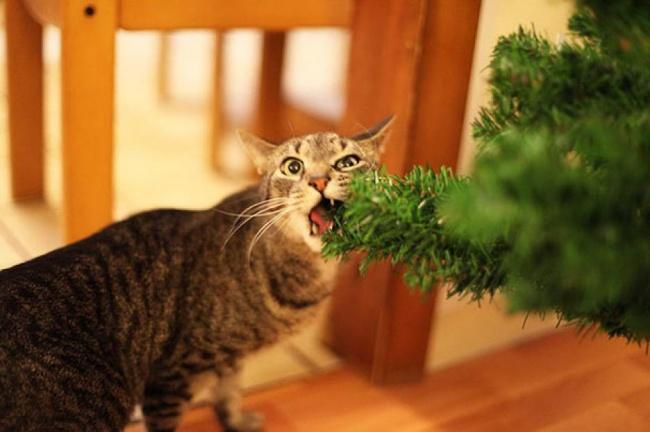 Perros y gatos que se enfrentaron a un arbol de navidad 10