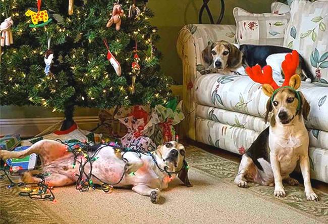 Perros y gatos que se enfrentaron a un arbol de navidad 12