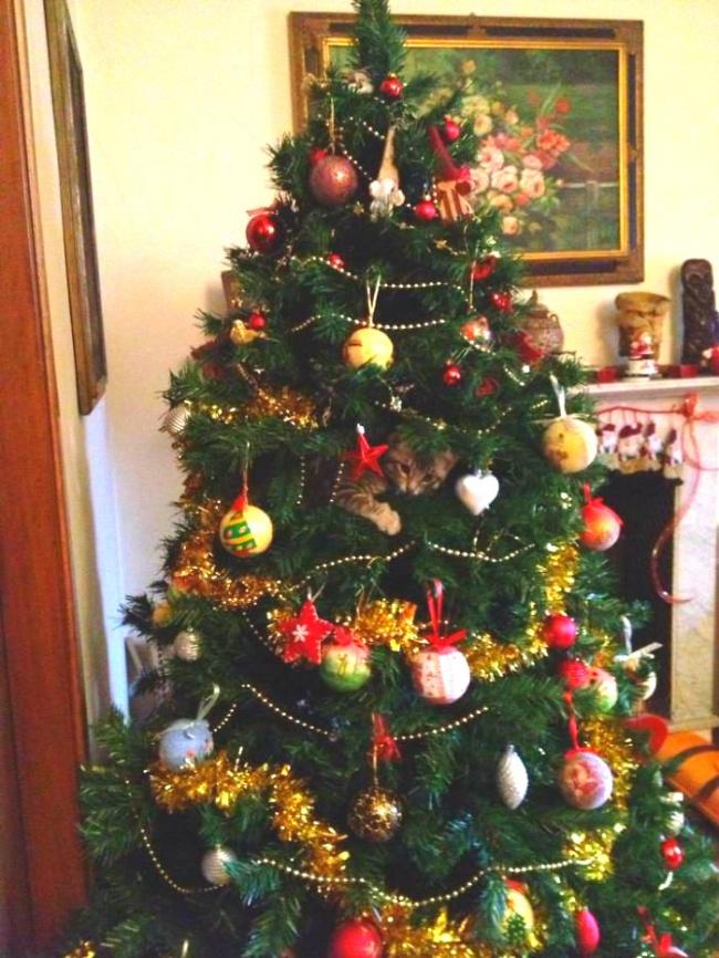 Perros y gatos que se enfrentaron a un arbol de navidad 13