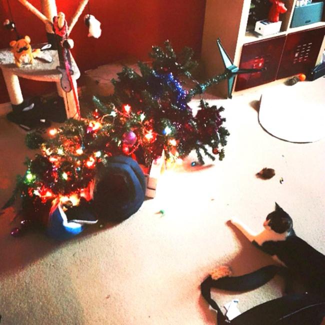 Perros y gatos que se enfrentaron a un arbol de navidad 14