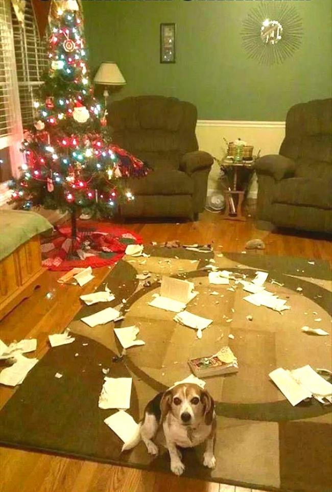 Perros y gatos que se enfrentaron a un arbol de navidad 15