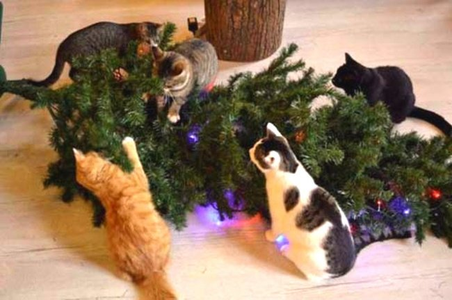 Perros y gatos que se enfrentaron a un arbol de navidad 17