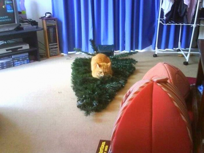 Perros y gatos que se enfrentaron a un arbol de navidad 18