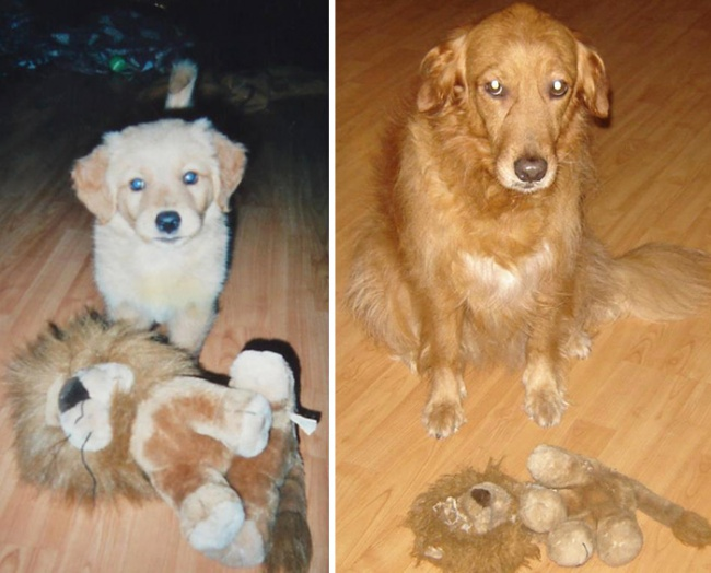 Perros y gatos son sus juguetes de la infancia 07