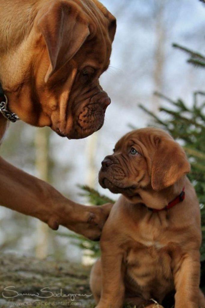 20 Perros y sus adorables e irresistibles Cachorros