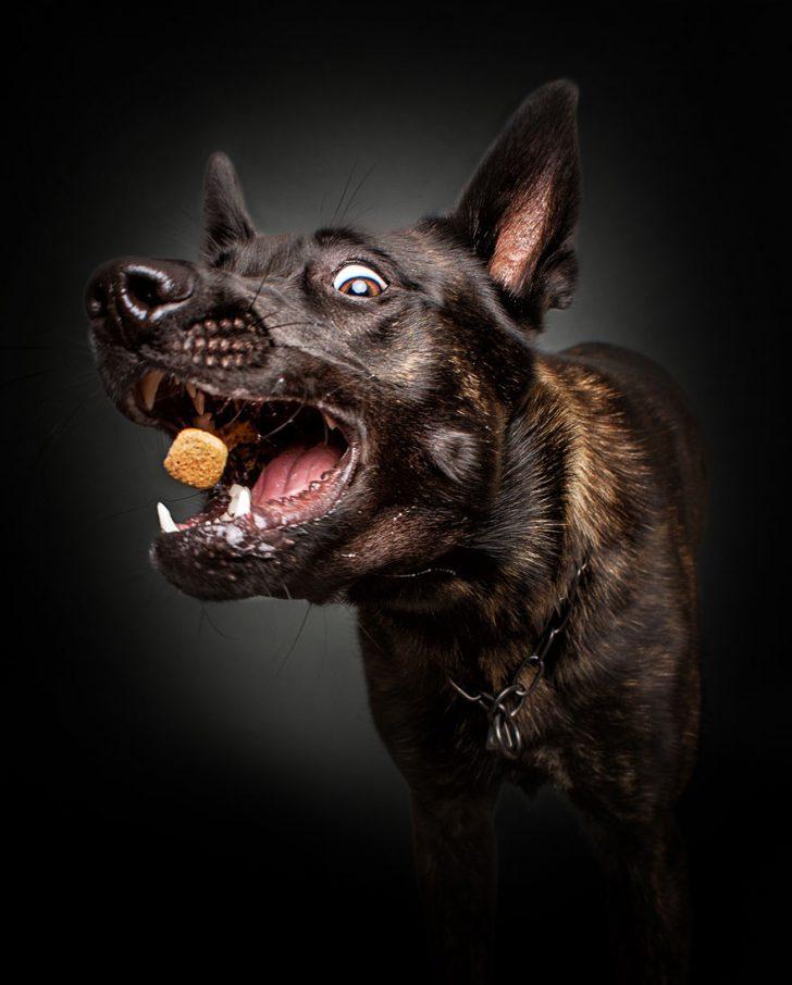 reacciones de los perros cuando consiguen comida 01
