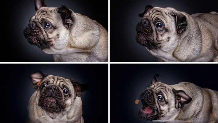 reacciones de los perros cuando consiguen comida 04
