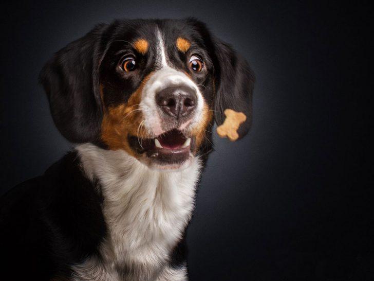 reacciones de los perros cuando consiguen comida 05