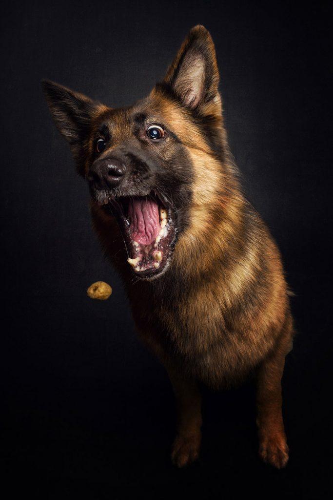 reacciones de los perros cuando consiguen comida 07