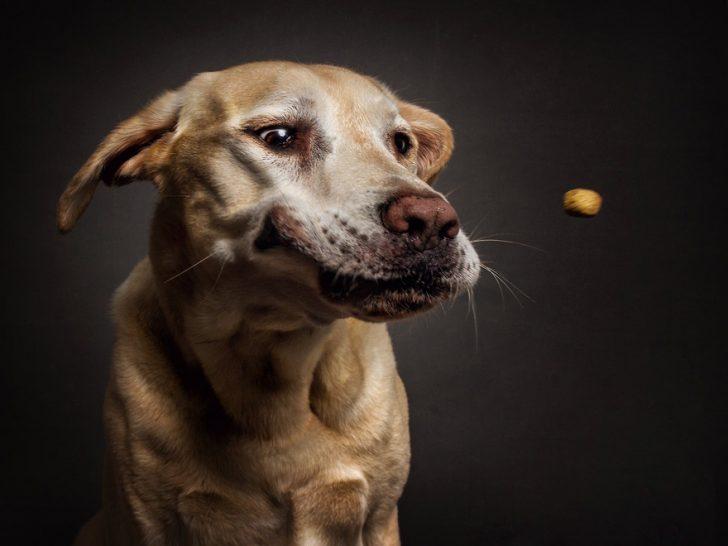 reacciones de los perros cuando consiguen comida 09