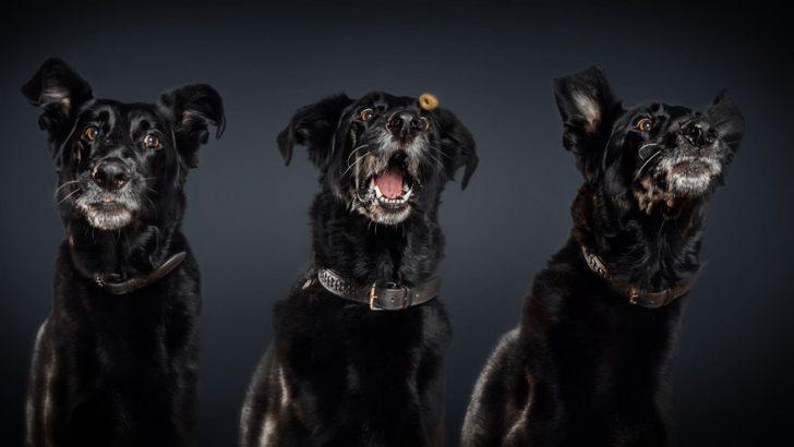 reacciones de los perros cuando consiguen comida 10