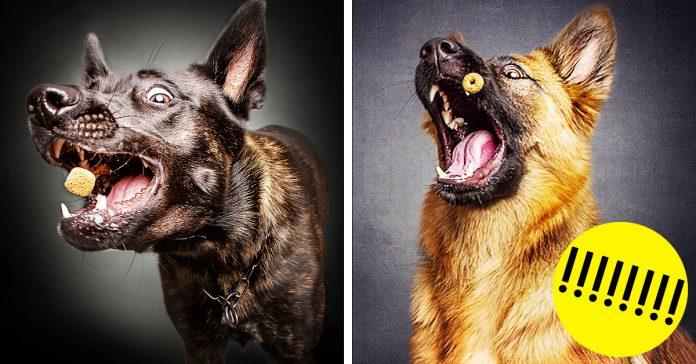 reacciones de los perros cuando consiguen comida banner
