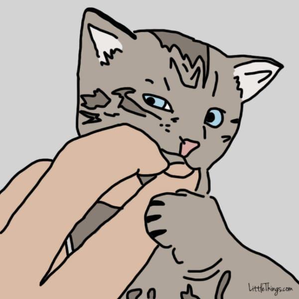10 maneras que tienen los gatos de decirte te quiero 07