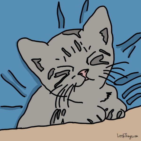 10 maneras que tienen los gatos de decirte te quiero 09