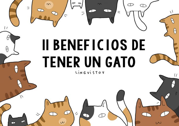11 Beneficios de tener un Gato
