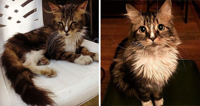 14 gatos antes y despues de ser adoptados 01