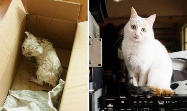 14 gatos antes y despues de ser adoptados 02