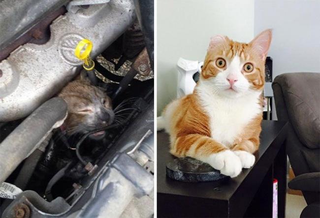 14 gatos antes y despues de ser adoptados 03