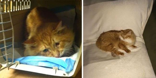 14 gatos antes y despues de ser adoptados 05
