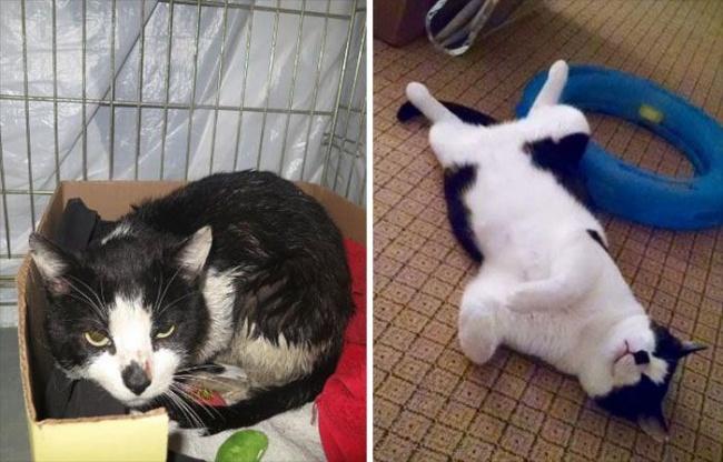 14 gatos antes y despues de ser adoptados 06