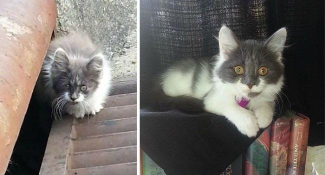 14 gatos antes y despues de ser adoptados 08