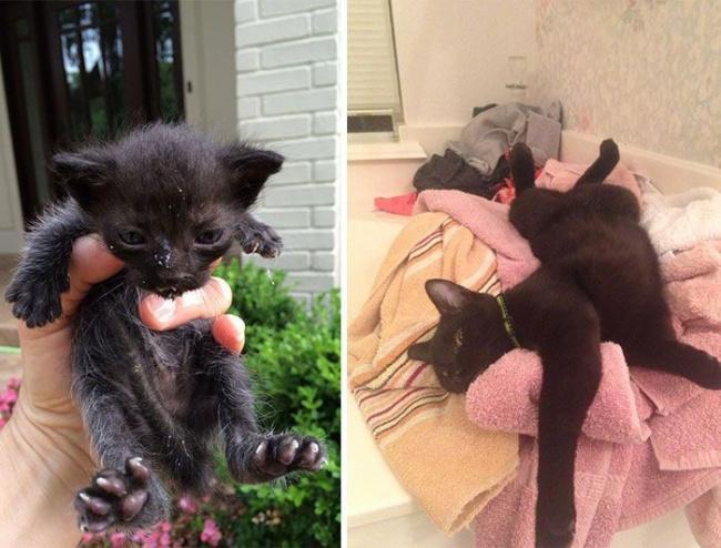 14 gatos antes y despues de ser adoptados 09
