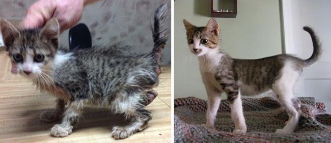 14 gatos antes y despues de ser adoptados 11