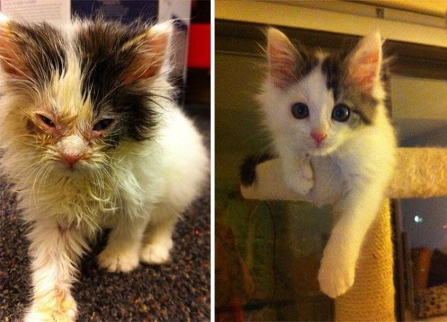 14 gatos antes y despues de ser adoptados 12