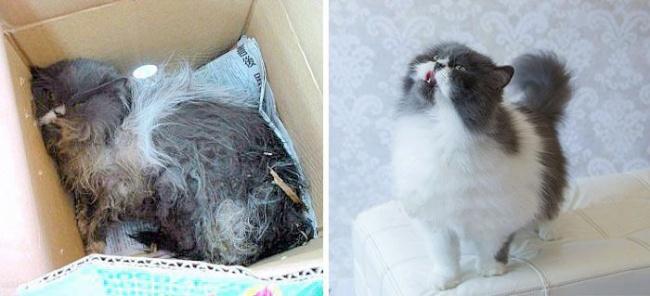 14 gatos antes y despues de ser adoptados 13