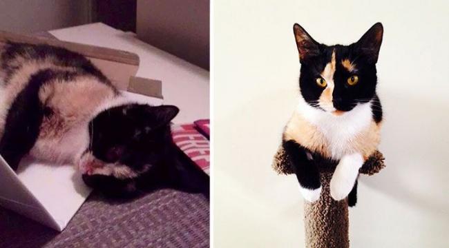 14 gatos antes y despues de ser adoptados 14