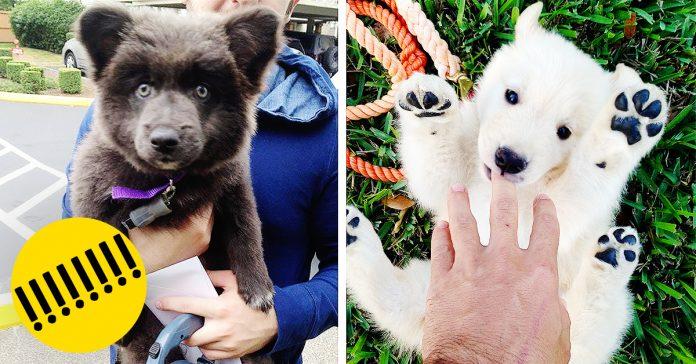 15 Perros ositos de peluche banner