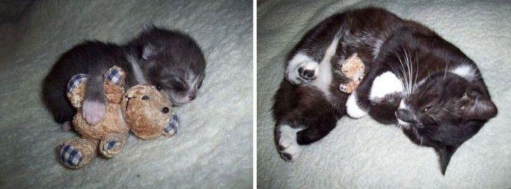 15 gatos que crecieron demasiado rapido 04