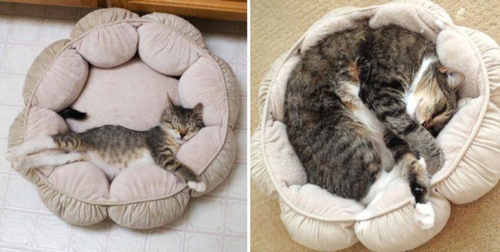 15 gatos que crecieron demasiado rapido 13