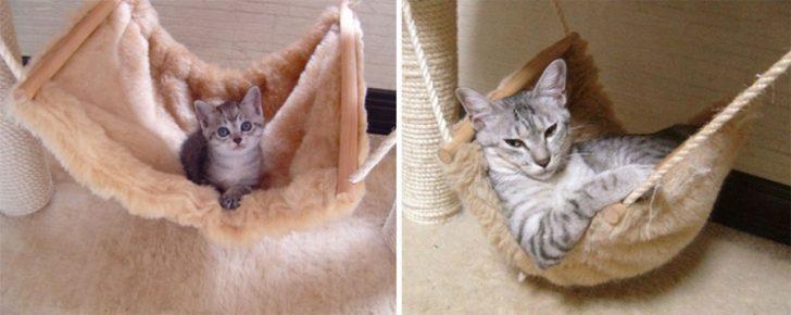 15 gatos que crecieron demasiado rapido 14
