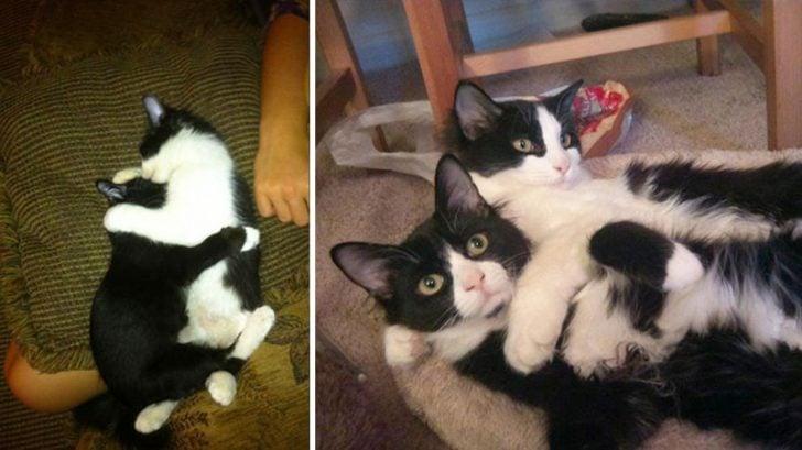 15 gatos que crecieron demasiado rapido 15