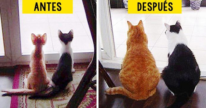 15 gatos que crecieron demasiado rapido banner