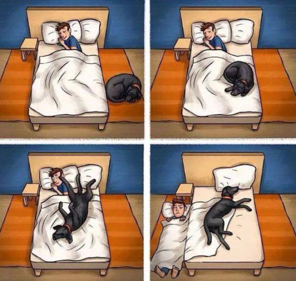 16 Divertidas Situaciones que sólo entenderán los amantes de los Perros
