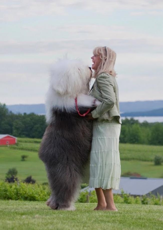 20 Adorables Perros que no son conscientes de lo MUCHO que han Crecido